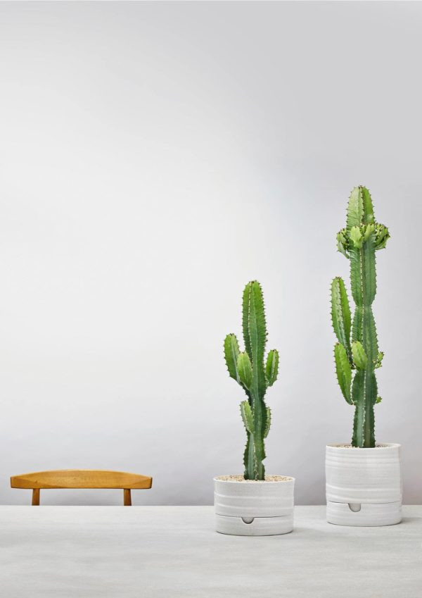 Self-watering-plant-pots-white-speckle-01-styled